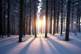Winter Wellness Through Acupuncture