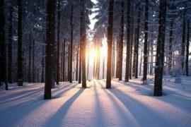Winter Wellness Through Acupuncture
